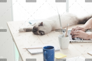 sleepy-cat-on-a-desktop-P4C6THM