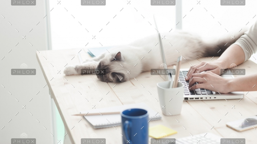 demo-attachment-12-sleepy-cat-on-a-desktop-P4C6THM